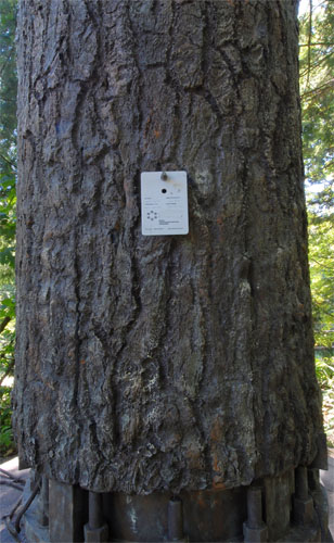 Monopine Cell Tower Concealment Bark